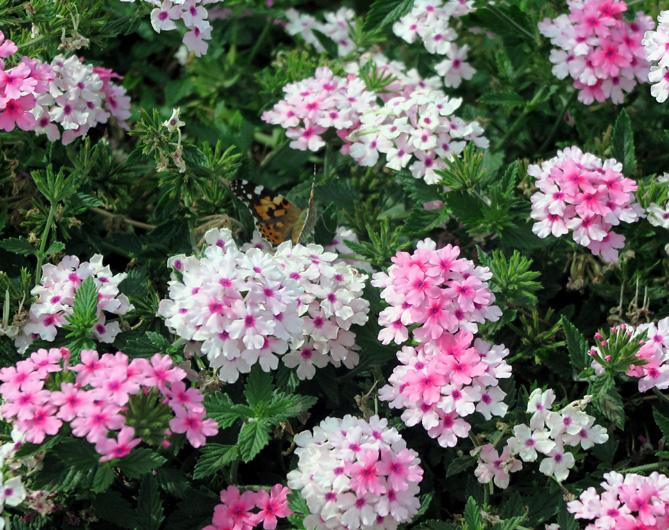 ...und viele bunte Blumen genießen.
